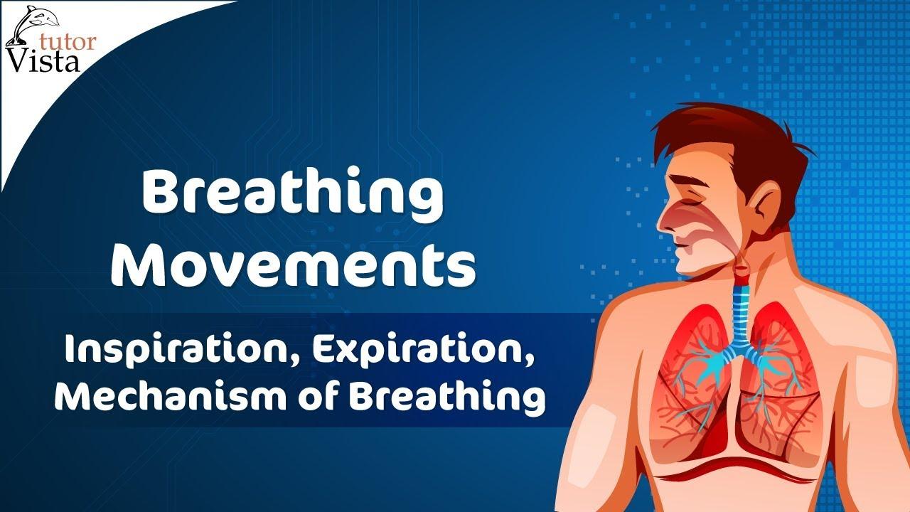 Breathing Movements Inspiration Expiration Mechanism Of Inhalation And Exhalation Diagram 9
