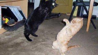 Briga de Gatos Sem Noção!