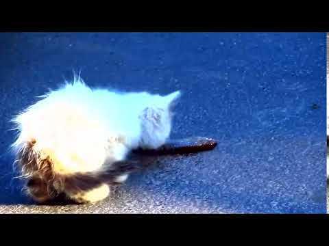 Cats hissing at me and meowing25