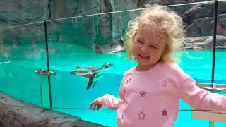 Kid feeds animals at the zoo