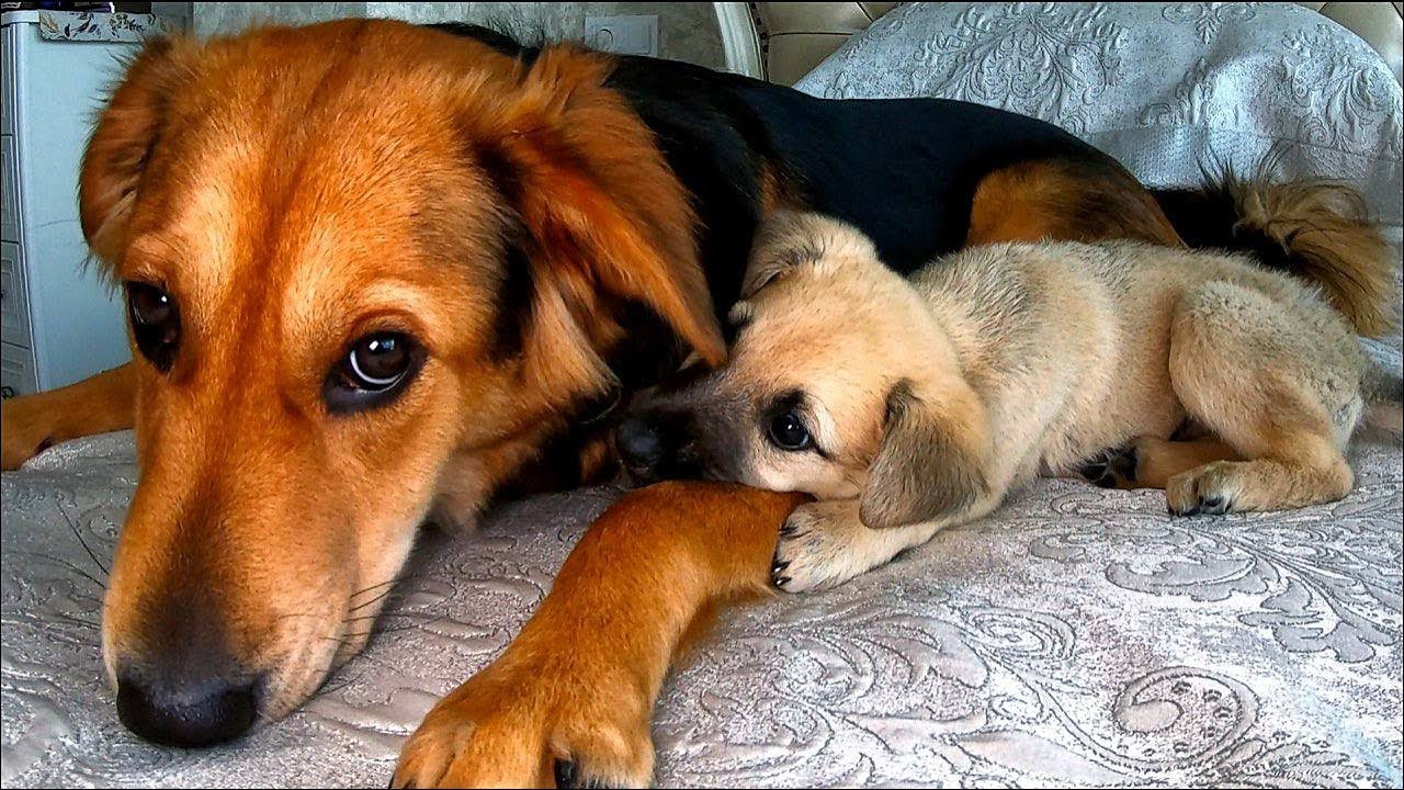 My Dog Adopted a Rescue Puppy with Rare Disease