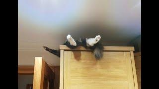衝撃を受けたw○○な猫ちゃんにじわじわきて、面白いw~I was shocked. ...
