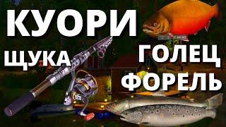 КУОРИ ОБНОВА Скоро ГОЛЕЦ КУОРСКИЙ ЩУКА ФАРМ НА КУОРИ РУССКАЯ РЫБАЛКА 4 Russian Fishing 4 РР4