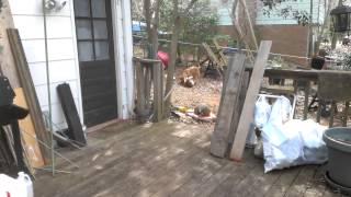 VIDEO0008.mp4