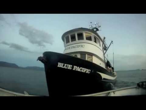 Alaska 2016 Seining – F/V Blue Pacific