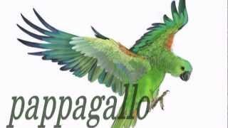 italian for children - pappagallo -  итальянский для детей
