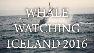 Video WHALE WATCHING IN ICELAND, HUSAVIK download MP3, 3GP, MP4, WEBM, AVI, FLV Desember 2017