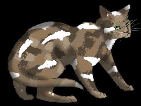 Top Ten Longest Warrior Cat Names