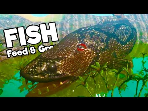 BIGGEST SNAKEFISH EVER BECOMES BIGGER THAN THE ENTIRE SWAMP! - Feed And Grow Fish Update Gameplay