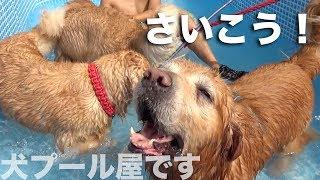 犬をプールに入れる屋さん2019