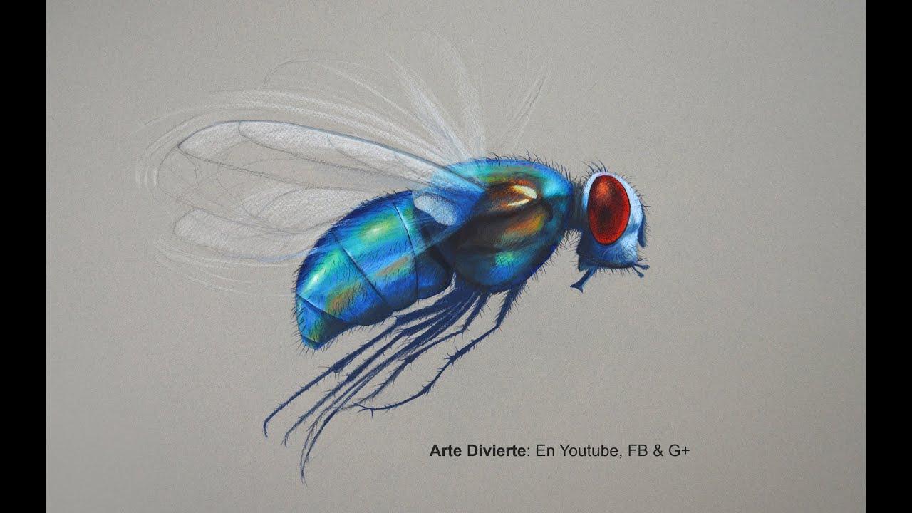 Cmo dibujar una mosca con lpices de colores  Arte Divierte
