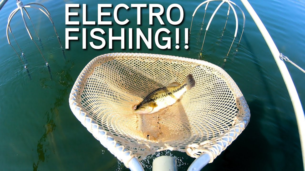 ELECTROFISHING With Fisheries Biologist!! | Shocking BIG Largemouth, Smallmouth & Bluegill!
