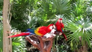 Мексика.Райские птицы.(Видео-путешествие по Мексике. Попугаи Ара в парке Xcaret в Мексике. ********Где меня найти******** Моя страница на..., 2013-04-08T17:08:41.000Z)