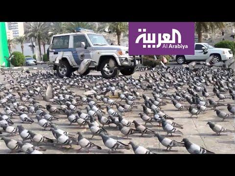حَمام الحرم يحط في الشوارع المحيطة بالحرم المكي  - نشر قبل 10 ساعة