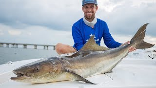 We caught our Cobia Limit! Catch N Cook