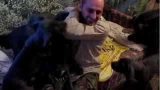 Потрясающие собаки немецкого дога! Продам щенков немецкого дога  супер видео(Продам щенков немецкого дога., 2013-02-25T20:17:48.000Z)