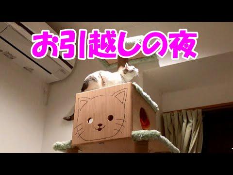 お引越しの夜もテンションMAXな猫 Happy cat on the 1st night of the moving!