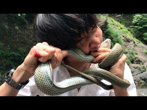 【閲覧注意】蛇を捕まえて食う 遭難した山から脱出#3 survaival in japan