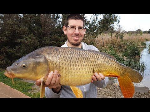 How To Catch Carp Fishing Cherry Lake Altona | Carp Fishing Melbourne