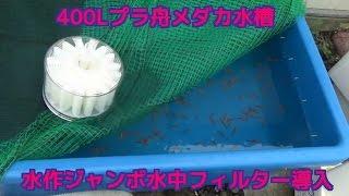 3か月前に400L水槽に楊貴妃400匹を入れ動画をご紹介 しましたがた...
