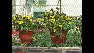 Садовые центры Чиполлино. Газоны, шланги, газонокосилки. 04.05.2015(В садовых центрах