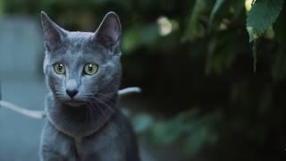 Путешествие с котом ➠ Ознакомьтесь с советами ветеринара