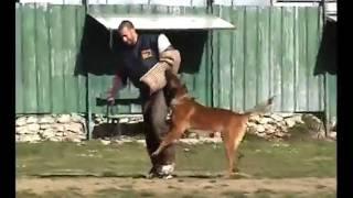 Ivan Jelavic Dog Training-helper Work,  Jazz + Kresimir, 10.2.2011.