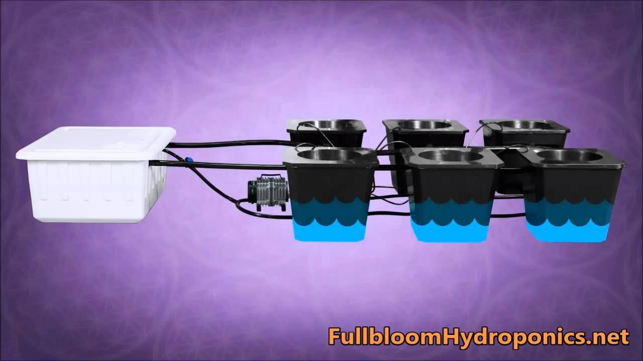 Bubble Flow Buckets Hydroponic System - Avaialable at:  FullbloomHydroponics net