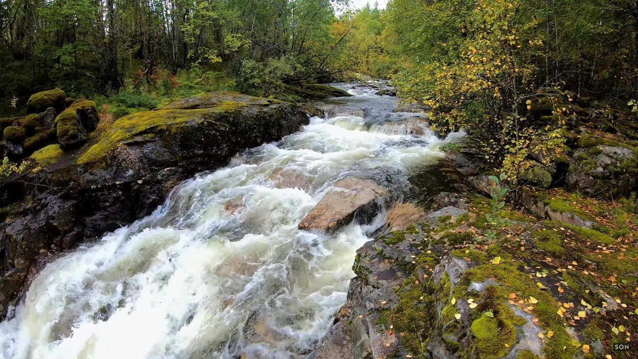 Nature sound of a strong river in the forest