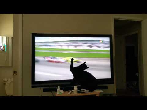 Nascar cat crashes!! ***funny***