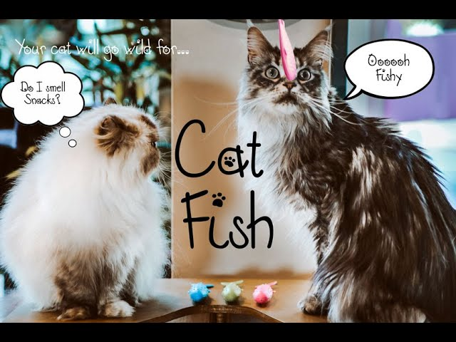 Kitty Cafe UK - Kickstarter Campaign for CatFish to bring exciting new Cat Toys to your Kitties