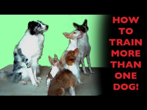 How to teach dogs to wait for their turn - Dog Training