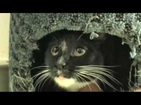 "Cat Whisprer ""Stray Cat Attack"""