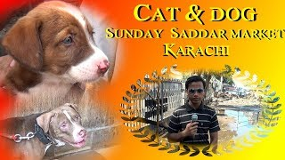 Dog & Cat Market Saddar Karachi 14-10-2018 latest Updates (Jamshed Asmi Informative Channel)