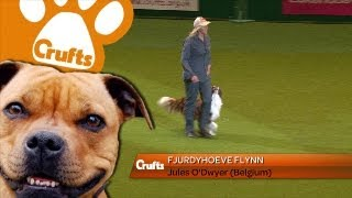 Heelwork To Music - International - Winner - Fjurdyhoeve Flynn - Crufts 2013