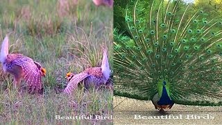 Beautiful Moments Of Lovely Birds You Must See - Beautiful Birds Playing, Feeding & Fighting.