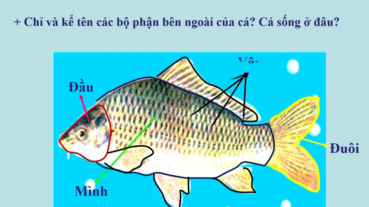 Tự nhiên – Xã hội – Lớp 3 – Bài Tôm, Cua , Cá.