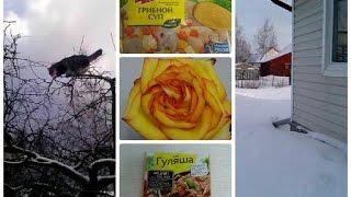 ВЛОГ/VLOG выходного дня.Обед.Цветы без повода.Заказ AVON.Дачные зарисовки зимой.(, 2015-02-09T16:11:04.000Z)