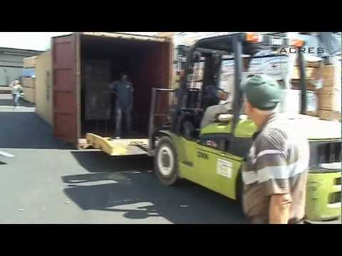 Automatic unloading timber from container | ACRES - exports of wood from Ukraine