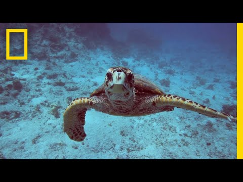 Thumbnail: Oceans 101 | National Geographic