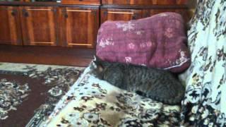 реакция моего кота на звуки кошек