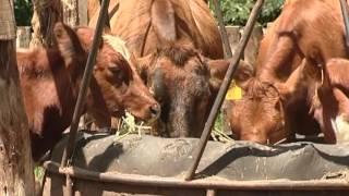Managing Diseases in the Farm Part 1
