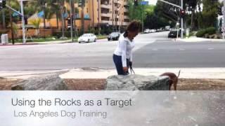 Pit Bull Terrier Training, Teaching To Target
