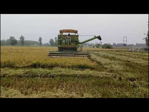The Success Story of Produce 150 Quintal paddy in One hectare