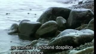 Ruska divocina S01E03 Sibir