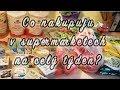 Velký nákup potravin | Veganský týden II. díl