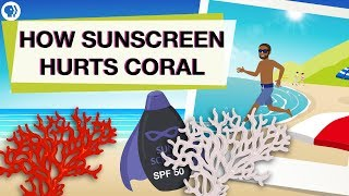 Is Your Sunscreen Hurting Coral Reefs?