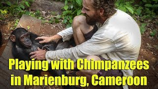 Playing with Chimpanzees in Marienburg, Cameroon
