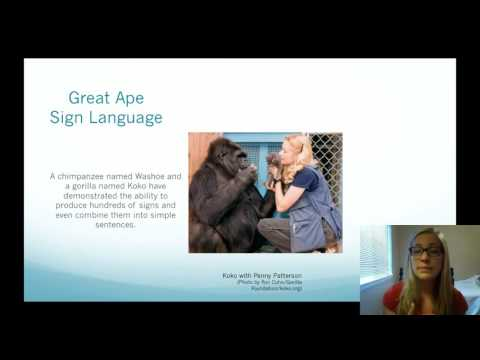 Great Ape Sign Language