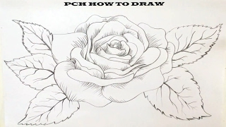 How to draw rose | PCH